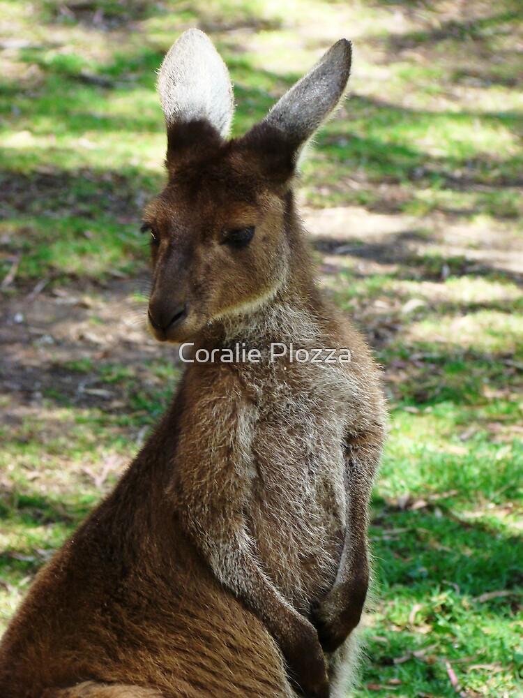 Kangaroo by Coralie Plozza