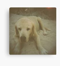 Pup One Canvas Print