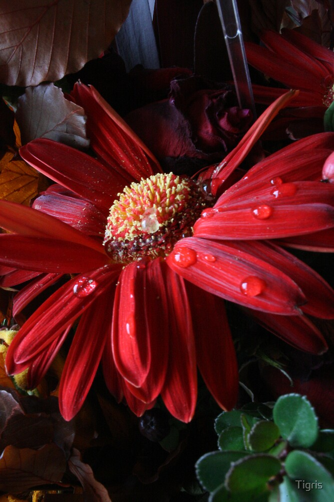 Flower by Tigris