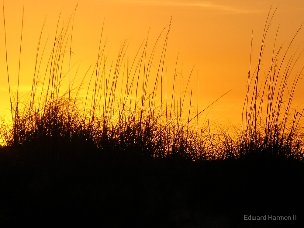 Sea Oats Sunset by Edward Harmon II