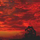 Ruby red by Neophytos