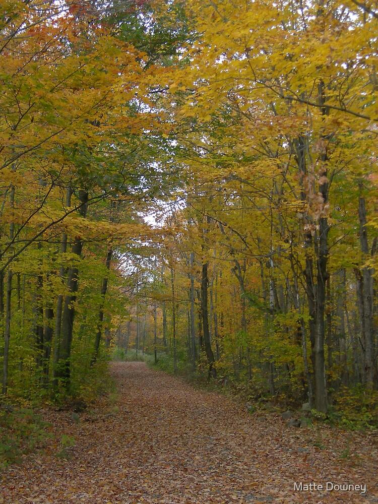 fall path by Matte Downey
