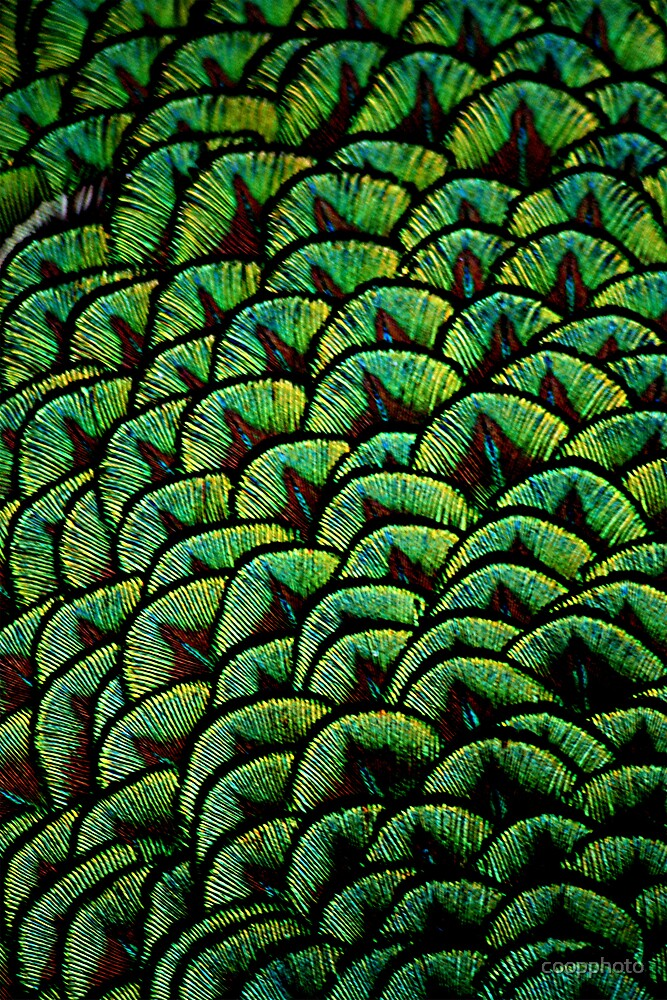 Scales of beauty by coopphoto