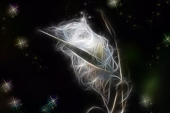 Milkweed Fractal by Kimberly Palmer