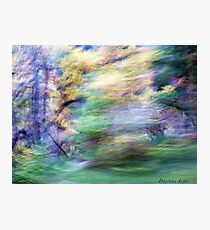 Fall Winds Photographic Print