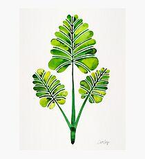 Tropical Palm Leaf Trifecta – Green Palette Photographic Print