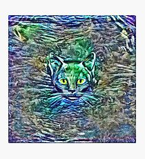 Maritime cat Photographic Print