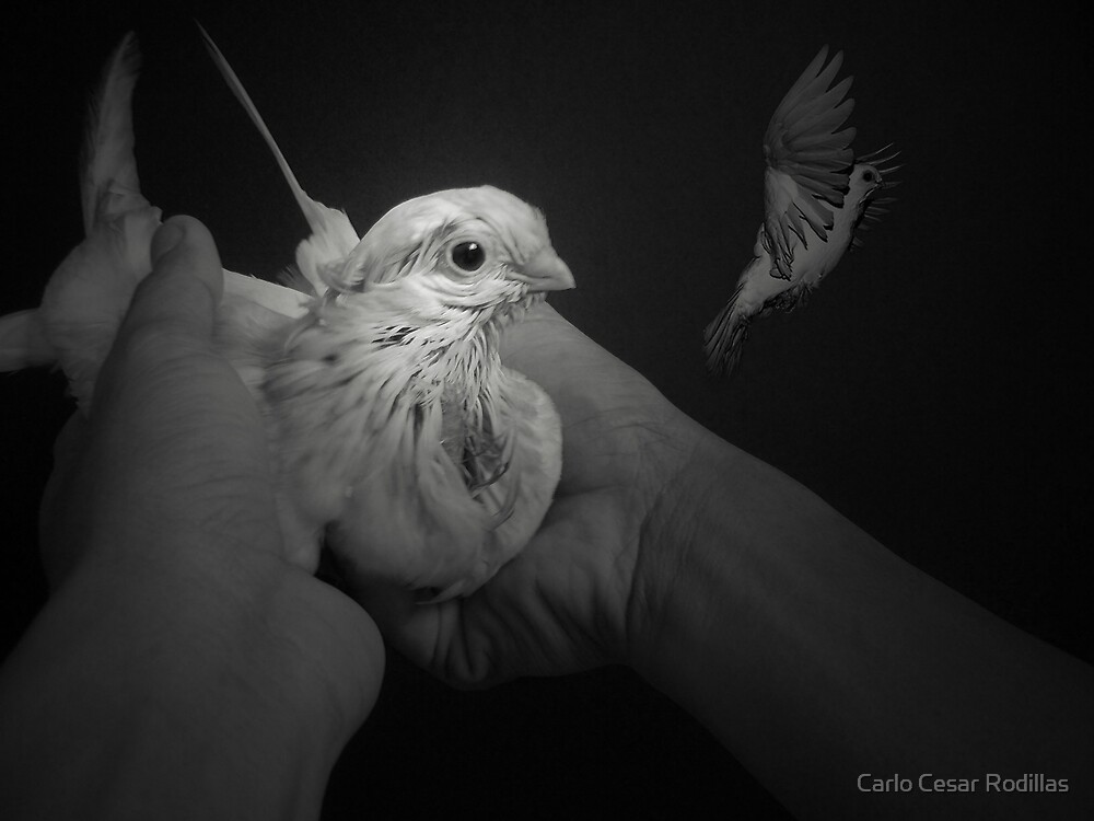We Are All Wishing To Be Free  by Carlo Cesar Rodillas