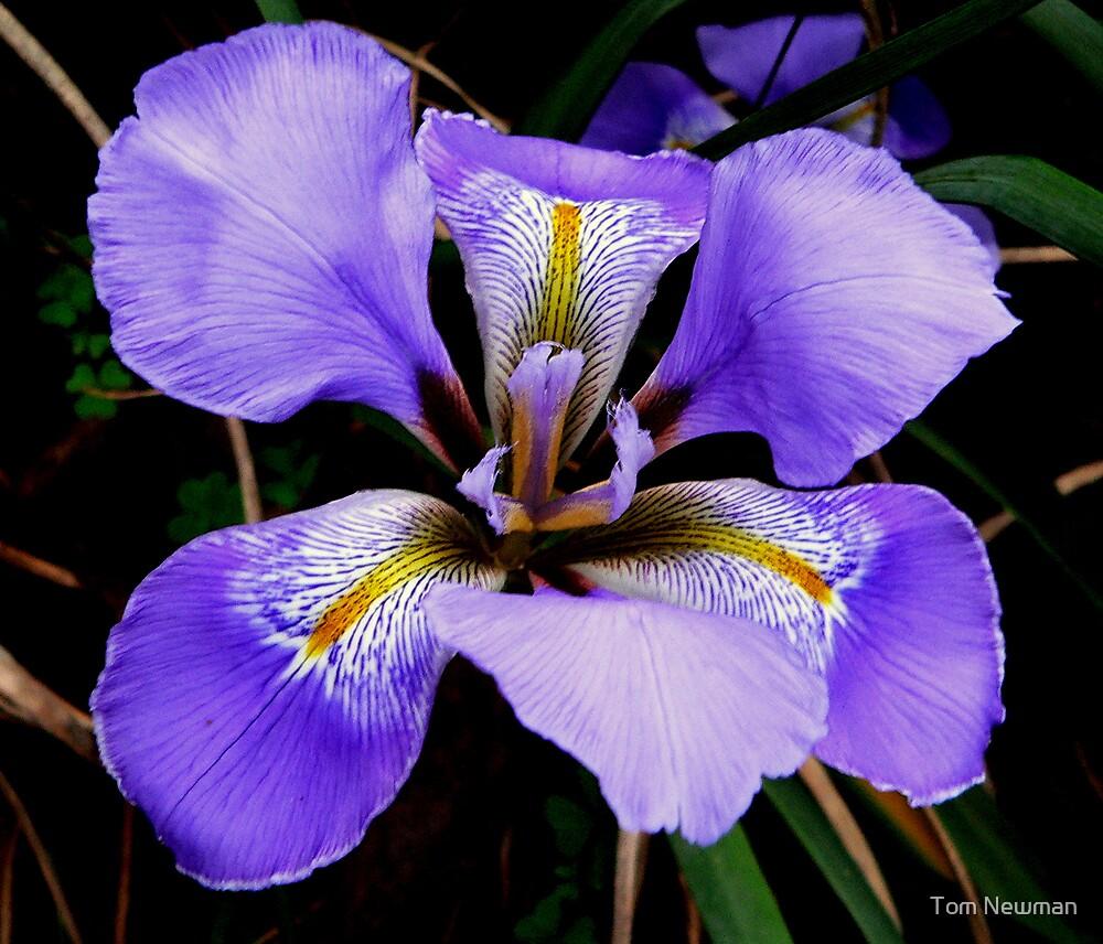 iris II by Tom Newman