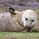 High Five by FranJ