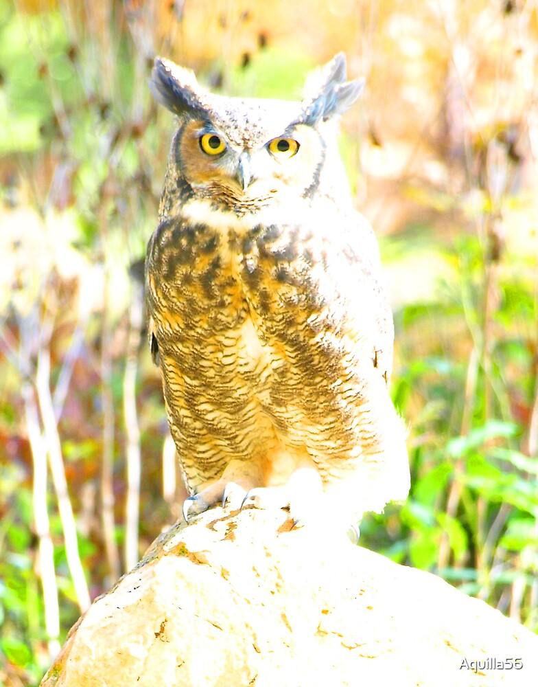 owl10122 by Aquilla56