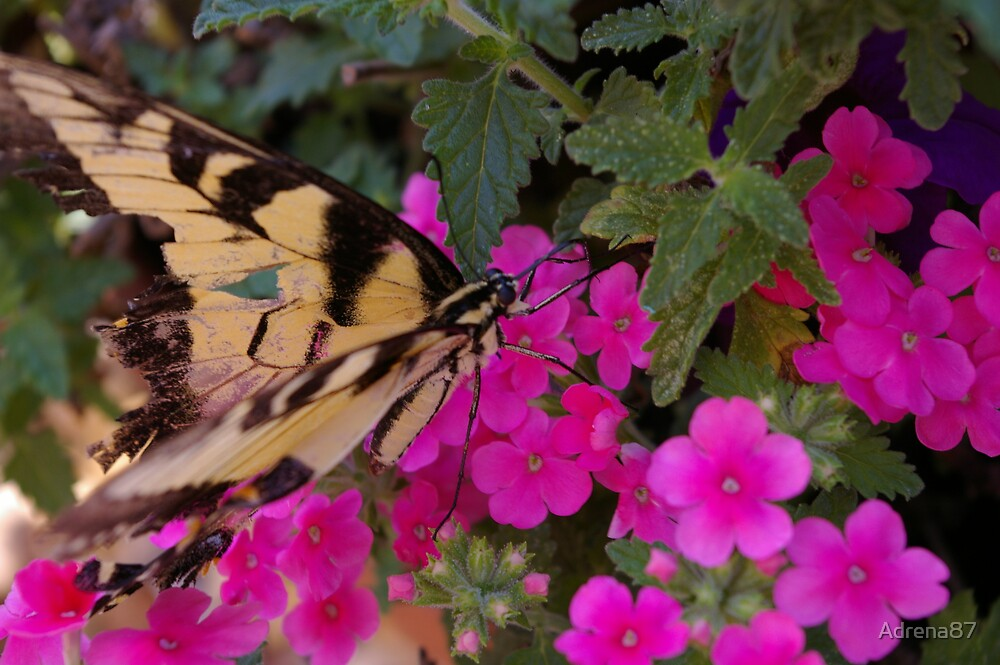 Butterfly Kisses by Adrena87