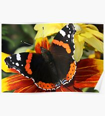 Butterfly wings on Rudbekia Poster