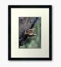Woodland Fungus Framed Print