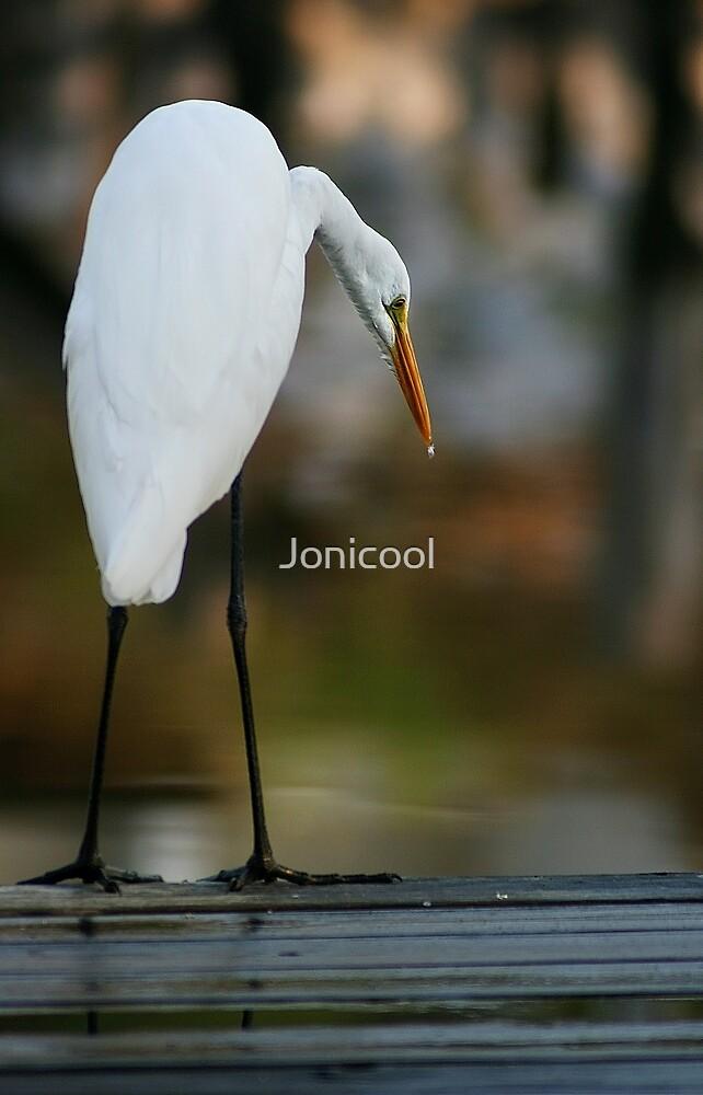 Pier Fishing by Jonicool
