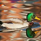 Duck reflection by LisaRoberts