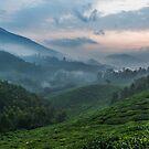 Early morning fog, Munnar by Guy  Berresford