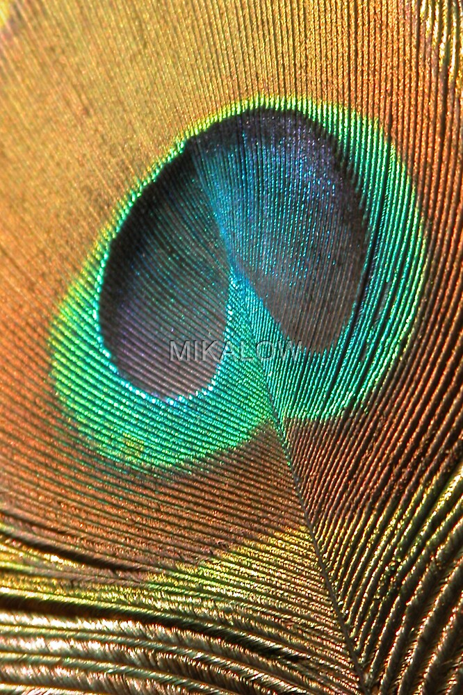 Peacock by MIKALOW