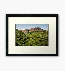 Tea plantation, Munnar Framed Print