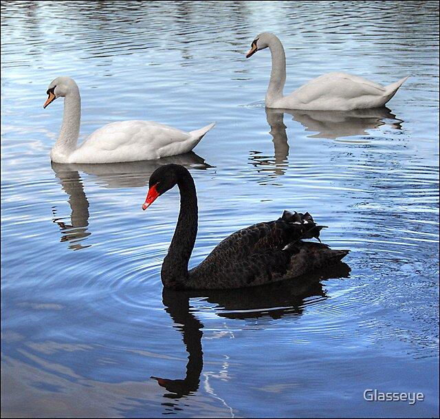 3 Swans by Glasseye
