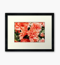 Peach Floral Photographic Prints Framed Print