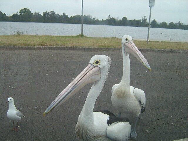 those freakin birds! by Plop