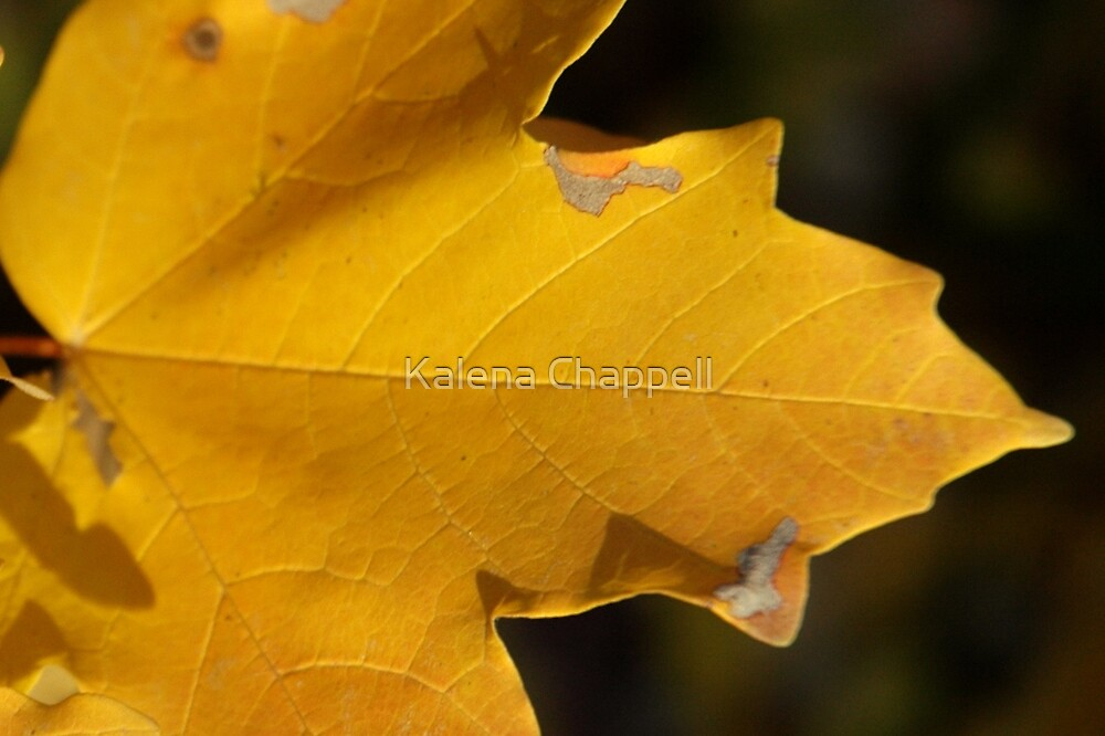 A Touch of Autumn by Kalena Chappell