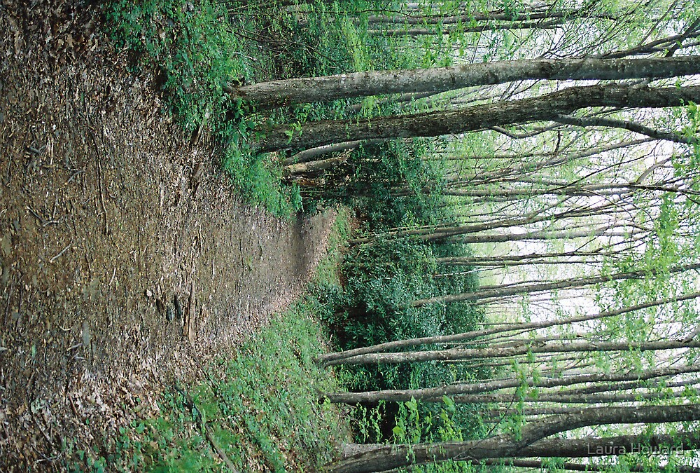 Wood Path Blue Ridge Parkway by Laura Howard
