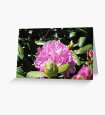Rhodedendron Greeting Card