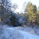 5 Meile Woods von Abiix