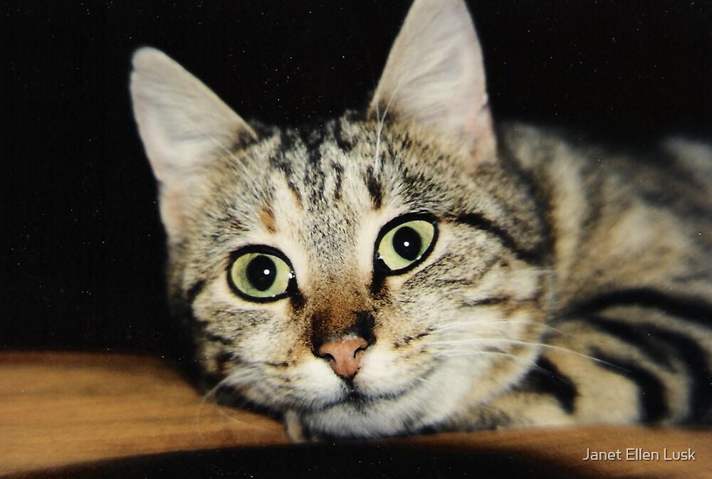Bright Eyed Kitten by Janet Ellen Lusk