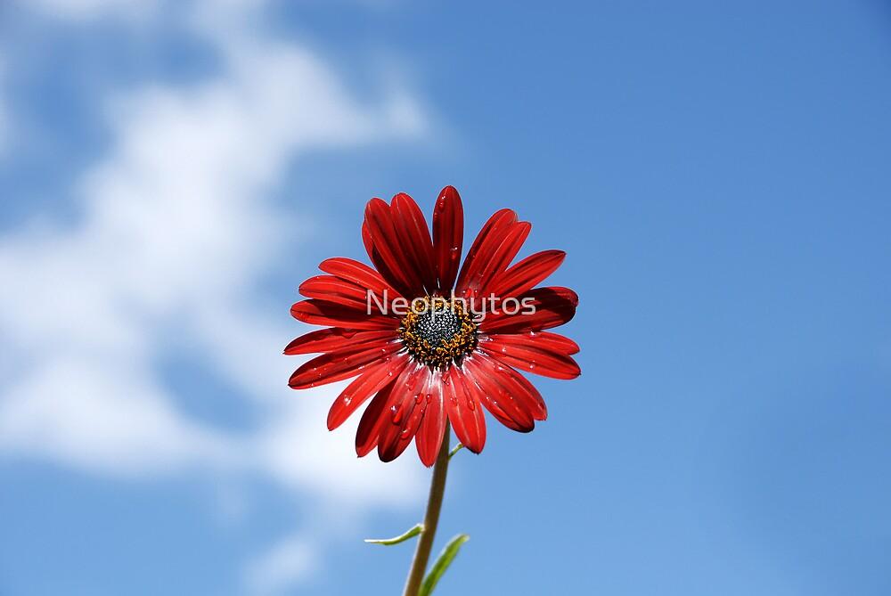Daisy in the sky by Neophytos