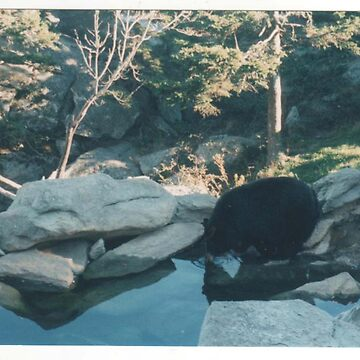 Grandfather mountain bear Boone, NC by JRae1983
