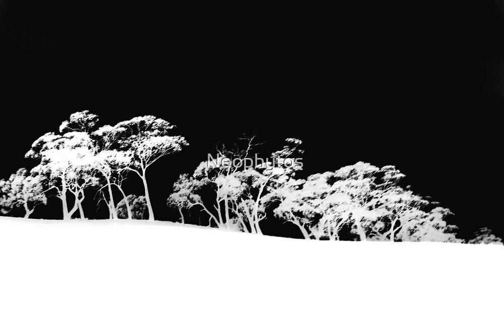 Gum trees in B/W by Neophytos