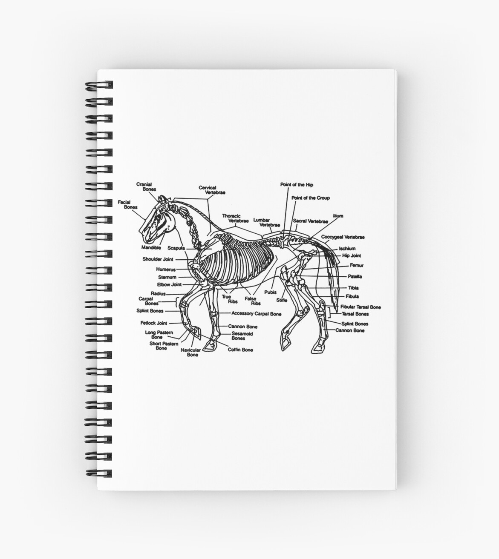 Horse Anatomy Skeleton Spiral Notebooks By Clarafornia Redbubble