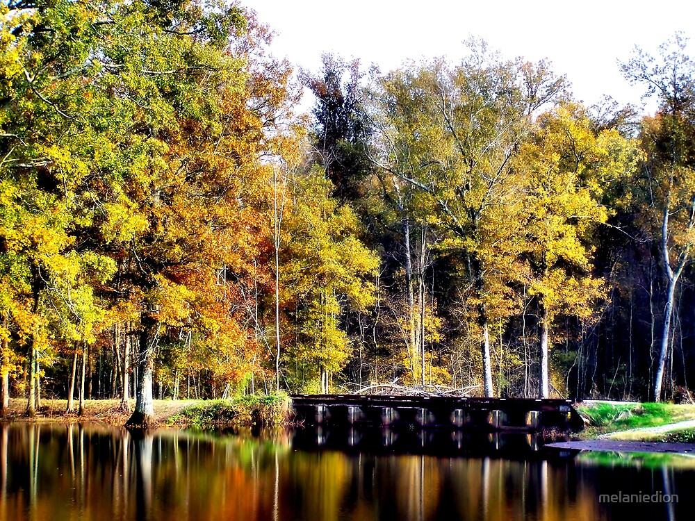 Reflections and a Bridge by melaniedion