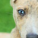 Hübsche blaue Augen von Abiix