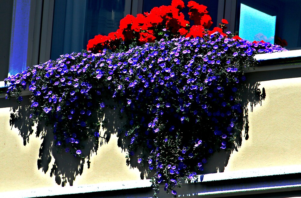Flowers on a balcony by JoTaylor