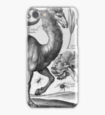 Wenceslaus Hollar - Camel iPhone Case/Skin