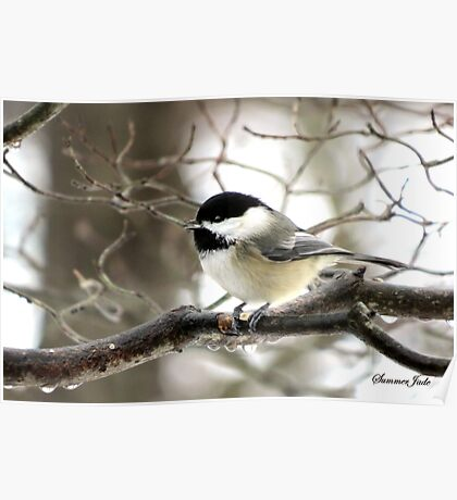 I Spy a January Thaw ~ Chickadee   Poster
