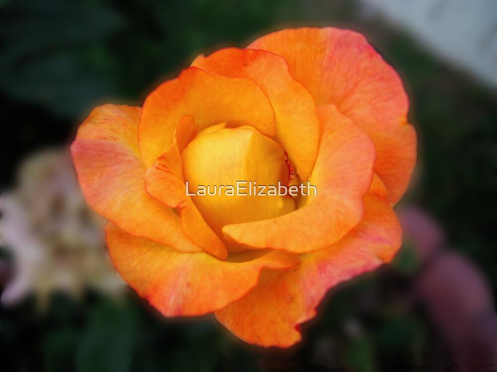 Late Bloom by LauraElizabeth