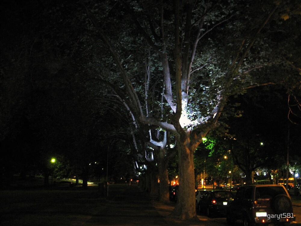 Trees of Light by garyt581