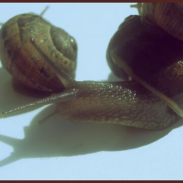 Snails by NinjaSteve