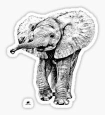 Irresistible Baby Elephant   African Wildlife Sticker