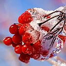 icy fruits by Manon Boily