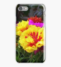 Portulaca grandiflora or Rose Moss iPhone Case/Skin