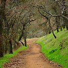 Mount Diablo Winter Path by photoartful