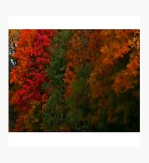 fall foliage Photographic Print