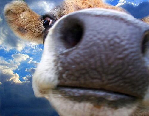 Moo by Terence J Sullivan