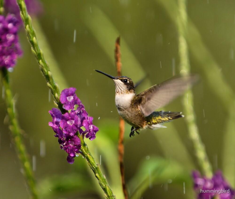 Jesus Send The Rain by hummingbird